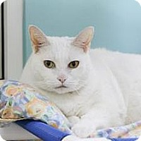 Adopt A Pet :: Kitty Cat - Miami, FL