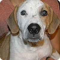 Adopt A Pet :: Toby - New Boston, NH