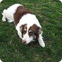 Adopt A Pet :: Gunther - Alderson, WV