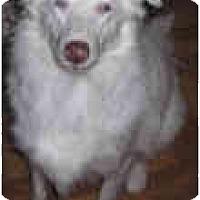 Adopt A Pet :: Ellie (Mantra) - Mesa, AZ