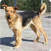 Adopt A Pet :: RJ~PENDING - Toronto/Etobicoke/GTA, ON