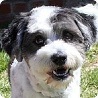Adopt A Pet :: Winston - La Costa, CA