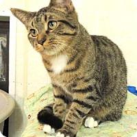Adopt A Pet :: Me-Mau - Westville, IN