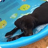 Adopt A Pet :: Macy Gray - Destrehan, LA