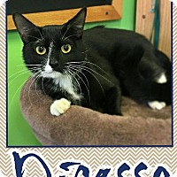 Adopt A Pet :: Picasso - Edwards AFB, CA