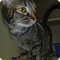 Adopt A Pet :: Que - Hamburg, NY