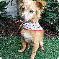 Adopt A Pet :: Teresa - Rancho Palos Verdes, CA