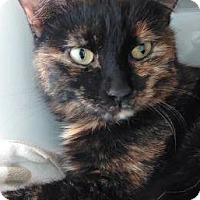 Adopt A Pet :: Tangerine - Cloquet, MN