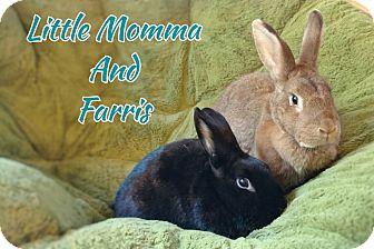 New Zealand Mix for adoption in Elizabethtown, Kentucky - Little Momma