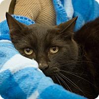Adopt A Pet :: Red - Gardnerville, NV