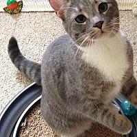 Adopt A Pet :: Rosie - Burbank, CA