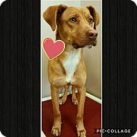 Adopt A Pet :: Gunner - Youngsville, NC