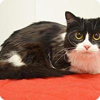 Adopt A Pet :: MUNCH - Sacramento, CA