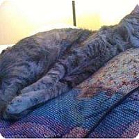 Adopt A Pet :: Terrie - Little Rock, AR