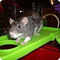 Adopt A Pet :: Basil - Greenwood, MI