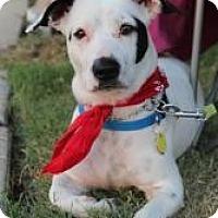 Adopt A Pet :: Penelope - Justin, TX