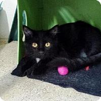 Adopt A Pet :: Leon - Belleville, MI