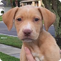 Adopt A Pet :: Angel#3M - Orlando, FL