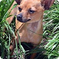 Adopt A Pet :: Rowan-Adoption pending - Bridgeton, MO