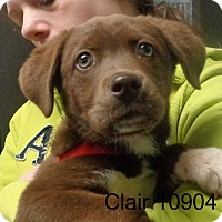 Adopt A Pet :: Claire - baltimore, MD