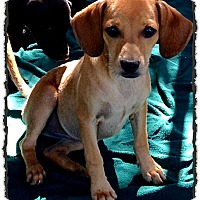 Adopt A Pet :: Neyya - Bastrop, TX