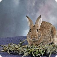 Adopt A Pet :: Gideon - Marietta, GA