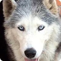 Adopt A Pet :: PERLA (video) - Los Angeles, CA