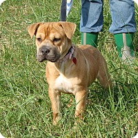 Adopt A Pet :: Angel - Cameron, MO