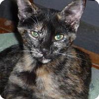 Adopt A Pet :: Ember - Dallas, TX