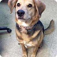 Adopt A Pet :: Missy - Oak Ridge, NJ