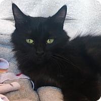 Adopt A Pet :: Hope - Sedalia, MO