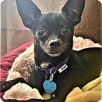 Adopt A Pet :: Bungee - AUSTIN, TX