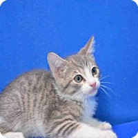 Adopt A Pet :: BUDDY - Pearland, TX