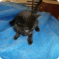 Adopt A Pet :: Lucille - Little River, SC