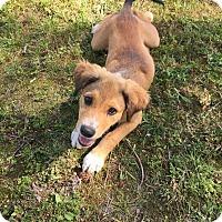 Adopt A Pet :: Peppy - Goldsboro, NC
