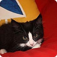 Adopt A Pet :: Bentley (LE) - Little Falls, NJ