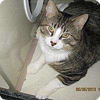 Adopt A Pet :: Budde - West Dundee, IL