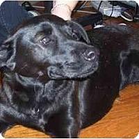 Adopt A Pet :: Cindy - Gilbert, AZ