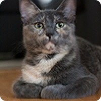 Adopt A Pet :: Ivie - Vancouver, BC