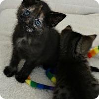 Adopt A Pet :: Frozen II Family---Elsa - Florence, KY