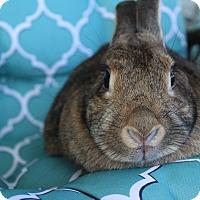 Adopt A Pet :: Tiffany - Hillside, NJ