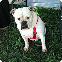 Adopt A Pet :: Yosha - mooresville, IN