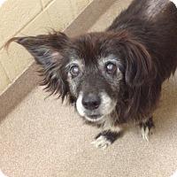 Adopt A Pet :: 1-7 - Triadelphia, WV