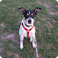 Adopt A Pet :: CHEVY - Wilmington, NC