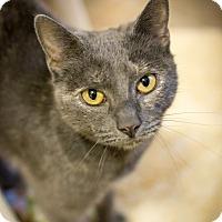 Adopt A Pet :: CC Ryder - Leander, TX