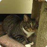 Adopt A Pet :: Penske 3C3B - Columbus, GA