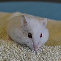 Adopt A Pet :: Mo - Michigan City, IN