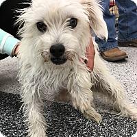 Adopt A Pet :: Winter - Tucson, AZ