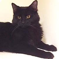 Adopt A Pet :: Serenity - Merrifield, VA