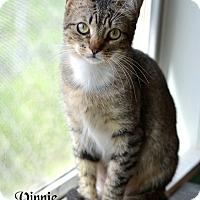 Adopt A Pet :: Vinnie - Conroe, TX